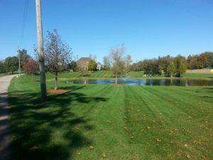 backyard pond in Brantford Ontario